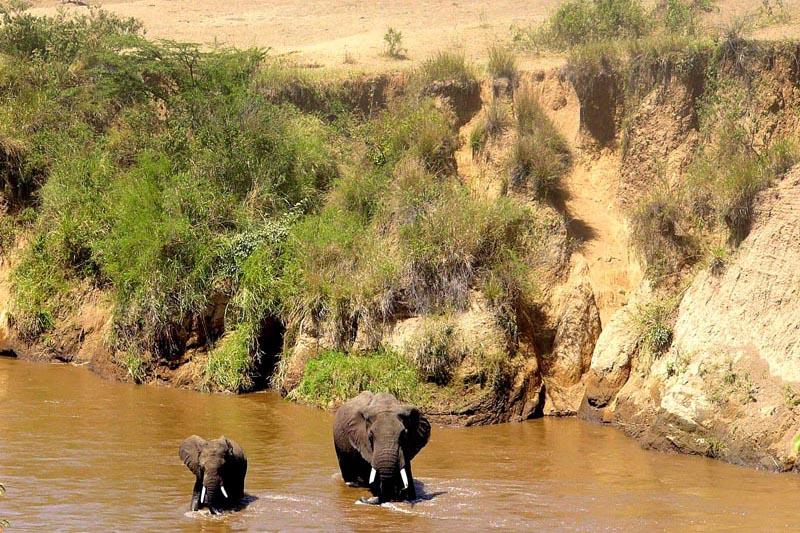 Safari Holidays - Worcestershire travel agency